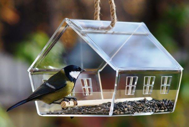 подкормка птиц летом