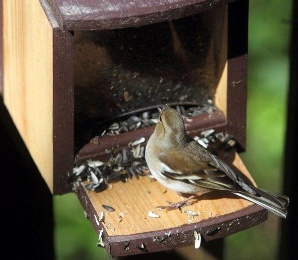 Какие птицы прилетают зимой к кормушкам фото